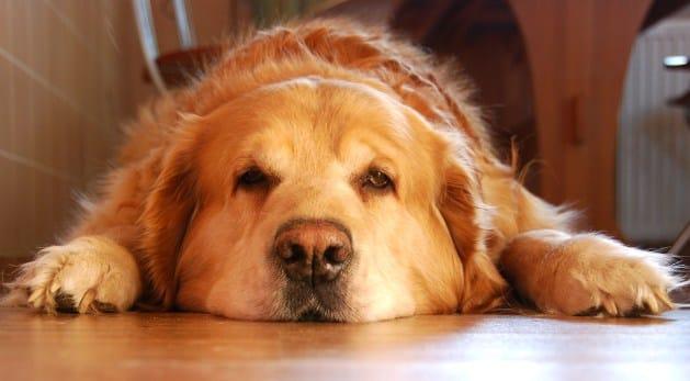 Aider votre chien à mémoriser ce qui a été appris
