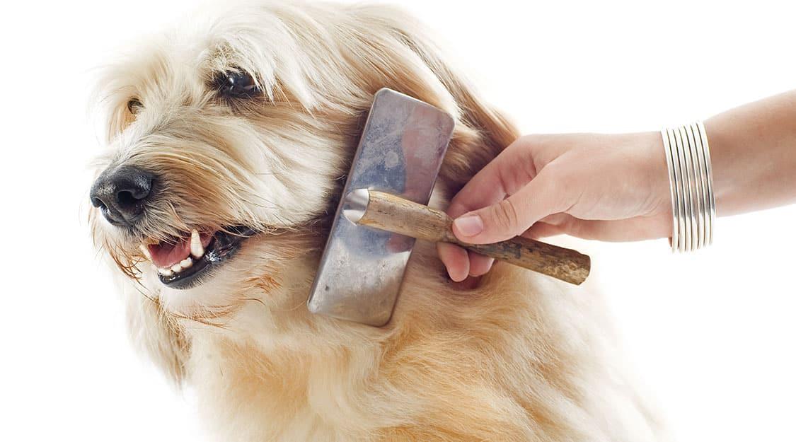 brossage poils chien