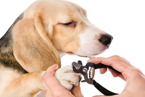 Entretien des griffes du chien