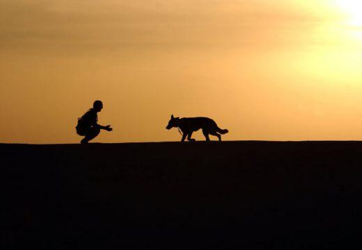 Protéger son chien grâce à une mutuelle pour animaux