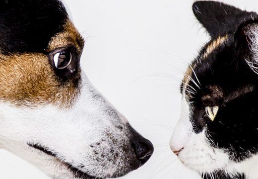 6 idées pour faciliter la cohabitation entre chien et chat
