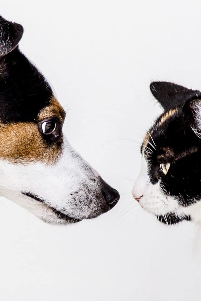 chien-chat-cohabitation