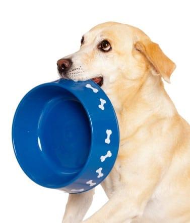 conseils nourrir chien