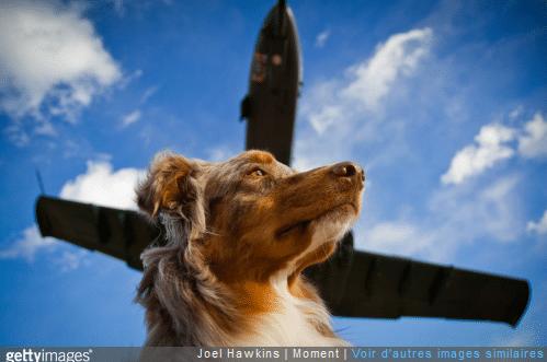 Zoom sur les précautions à prendre quand on voyage avec son chien en avion