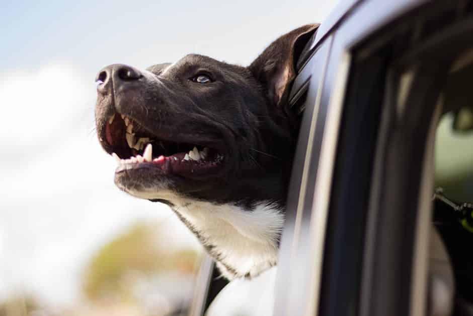 chien-voyage