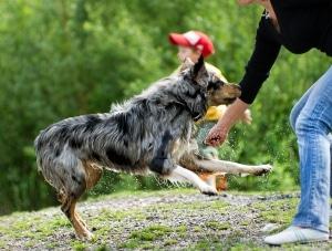 Comprendre son animal : attitudes du chien