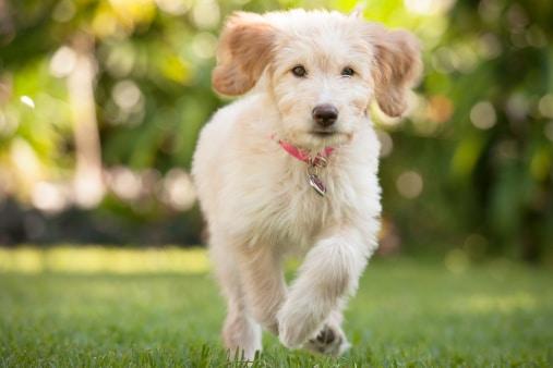 Solutions contre les chiens fugueurs