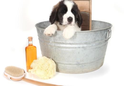 Les bons gestes du toilettage pour chien