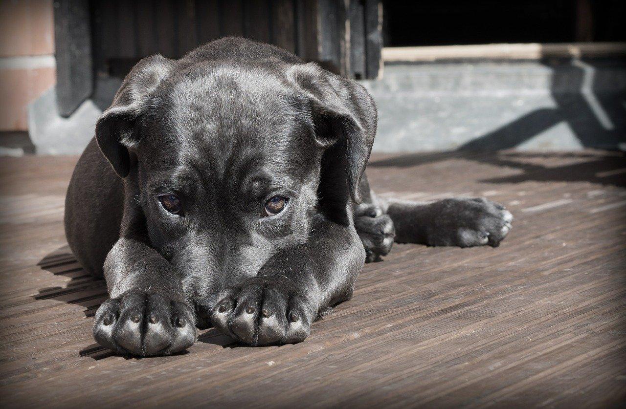 chien noir allongé sur une terrasse